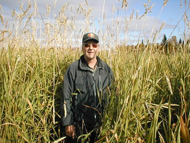 Bo Lundmark in Reed Canary Grass field