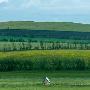 R_grassland-unsplash_d z